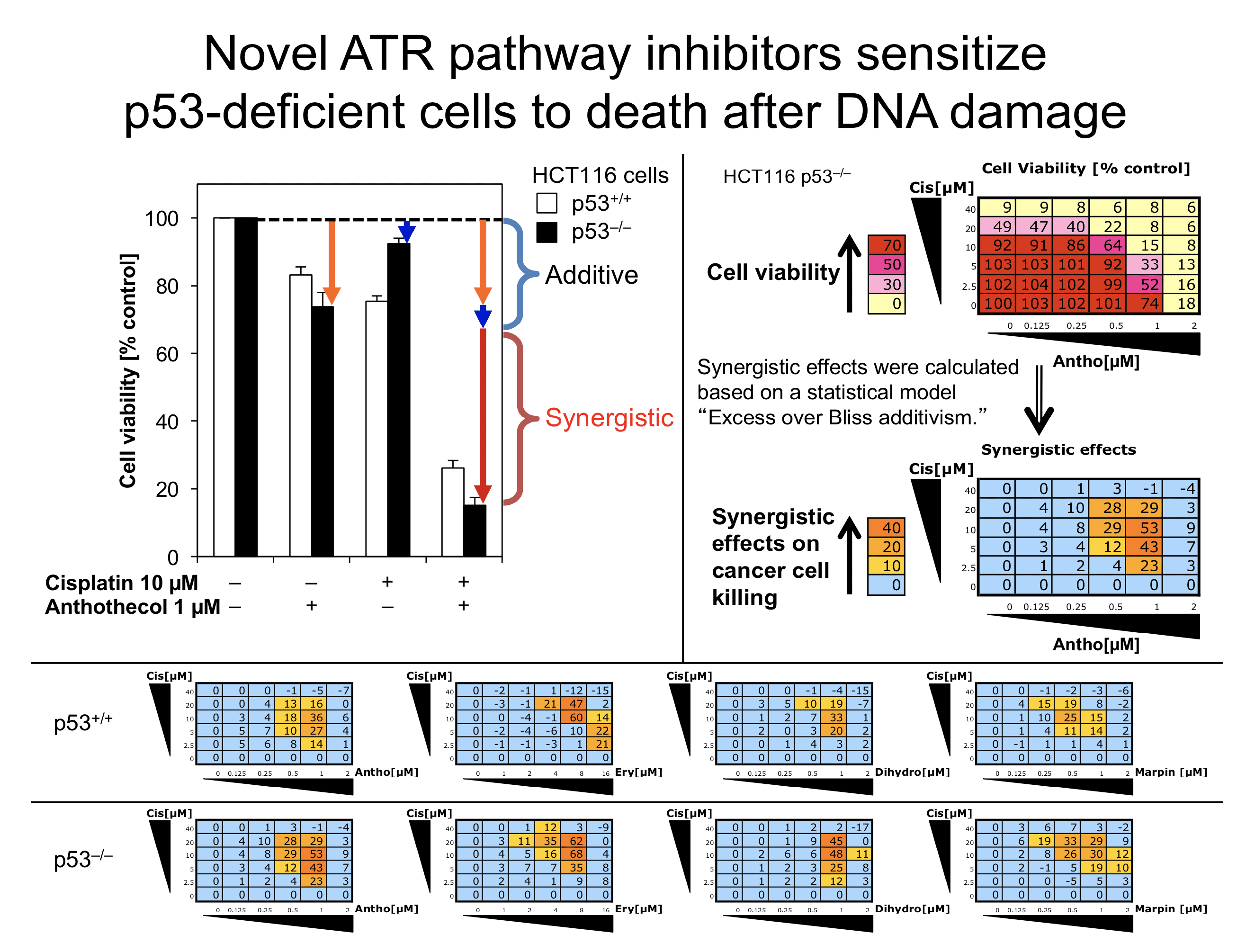 KawasumiLab-Research-02-ATRInhibitors-03-ChemosensitizationByNovelATRPathwayInhibitors